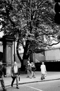 This is the tree at the Nassau Street entrance to Trinity College. It is a meeting place for many Dubliners.